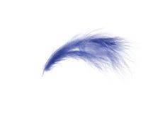 Blue feather Stock Photos