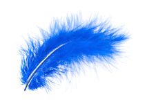 Blue feather on white Royalty Free Stock Photos