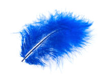 Blue feather on white Stock Photography