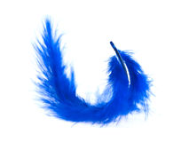 Blue feather on white background Stock Image