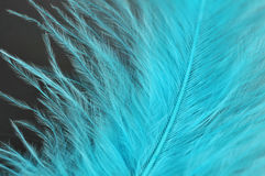 Blue feathers Royalty Free Stock Image