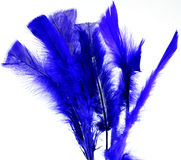 Blue feathers Stock Photography