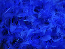 Blue feathers. Blue feather boa abstract texture Royalty Free Stock Photography