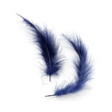 Blue feathers. Isolated royalty free stock images