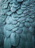 Blue feathers background Stock Photos