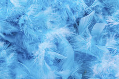 Blue Feathers Royalty Free Stock Photography