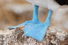 Blue feet Royalty Free Stock Photos