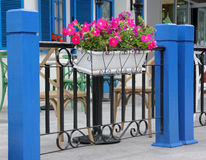 Blue fence and flower decoration Royalty Free Stock Image