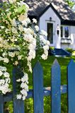 Blue fence with white flowers. Blue picket fence with flowering bridal wreath shrub and residential house Stock Photography
