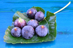 Blue figs on mulberry leaf Royalty Free Stock Photo