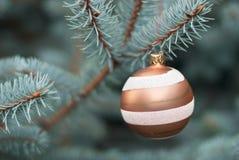 Blue fir-tree Stock Photos
