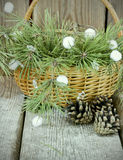 Blue fir tree branches with pine cones in a basket Royalty Free Stock Photography