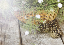 Blue fir tree branches with pine cones in a basket Stock Photography