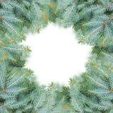 Blue fir tree frame Royalty Free Stock Photo