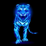 Blue fire tiger. Blue fire tiger  on black background Stock Photography