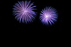 Blue fireworks display. Blue fireworks with copy space, native space, black background Royalty Free Stock Image