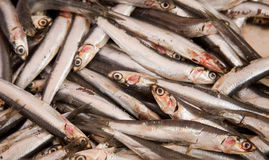 Blue fish (anchovies) Royalty Free Stock Photos