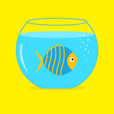 Blue fish in the aquarium. Card. Royalty Free Stock Images