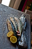 Blue fish freshly caught great for a healthy diet Royalty Free Stock Photography