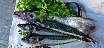 Blue fish freshly caught great for a healthy diet Stock Photography