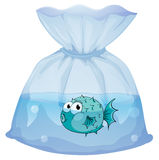 A blue fish inside the plastic. Illustration of a blue fish inside the plastic on a white background Stock Photo