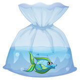 A blue fish inside the plastic pouch. Illustration of a blue fish inside the plastic pouch on a white background Stock Images