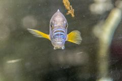 Blue fish look you at me. I see that like - this fish - say hello you in Portugal stock photo
