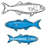 Blue Fish Mascot Stock Photo