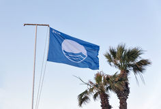 Blue flag 2016 and palm trees against clear sky Royalty Free Stock Photos