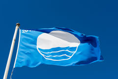 Blue Flag Swimming Stock Images