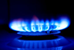 Blue Flame of a Gas Cooker Stock Photo