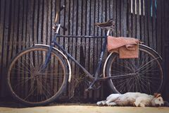 Blue Flat Bar Bike Beside Yellow Labrador Retriever Stock Photography