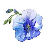 Blue flax flower. Floral botanical flower. Isolated illustration element. Aquarelle wildflower for background, texture, wrapper pattern, frame or border Stock Photo
