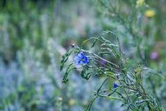 Blue Flax Royalty Free Stock Photos
