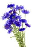 Blue floral Stock Photos