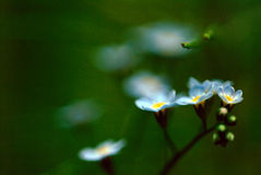 Blue Floral Blur Royalty Free Stock Images