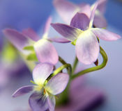 Blue flovers Royalty Free Stock Photo