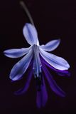 Blue flower Stock Photo