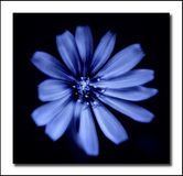 Blue flower. A blue flower on a black background royalty free stock photo