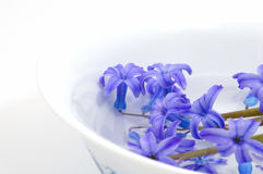 Blue flower. Blue aromatic flower (japanese concept Royalty Free Stock Photography