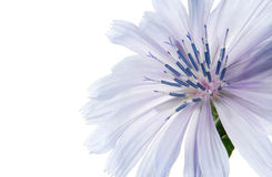 Free Blue Flower Royalty Free Stock Photos - 29093328