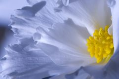Blue flower Stock Photography
