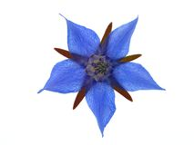 Blue flower Royalty Free Stock Image
