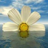 Blue_Flower Royalty Free Stock Photo