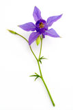 Blue flower Stock Image