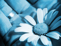 blue flower background Royalty Free Stock Images
