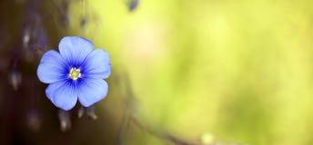 Blue flower banner Stock Photo