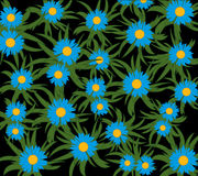 Blue flower on black. Much beautiful flowers of the blue colour on black background Royalty Free Stock Images
