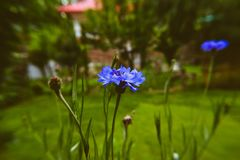Blue flower with blurry Background stock photos