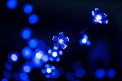 Blue flower bokeh background abstract light Royalty Free Stock Photos
